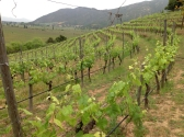 clos apalta vineyard