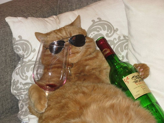 a-funny-cat-glass-wine-bottle.jpg