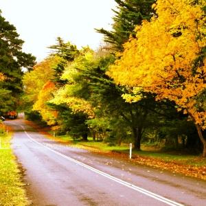 Orange road trip
