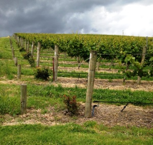 wine wankers yarra valley vineyards great wine blog images