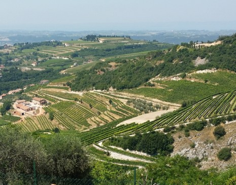 The triangular La Poja vineyard at top of hill at top middle of photo with La Grola down to the left