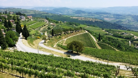 Looking over Allegrini's Amarone vineyards out into the vineyards of Valpolicella