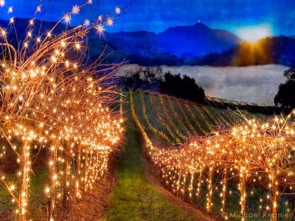 wine wankers funny christmas wine image 14