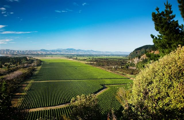 stunning image of Wither Hills Rarangi Vineyard by Jim Tannock