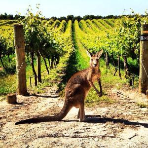 wine wankers aussie