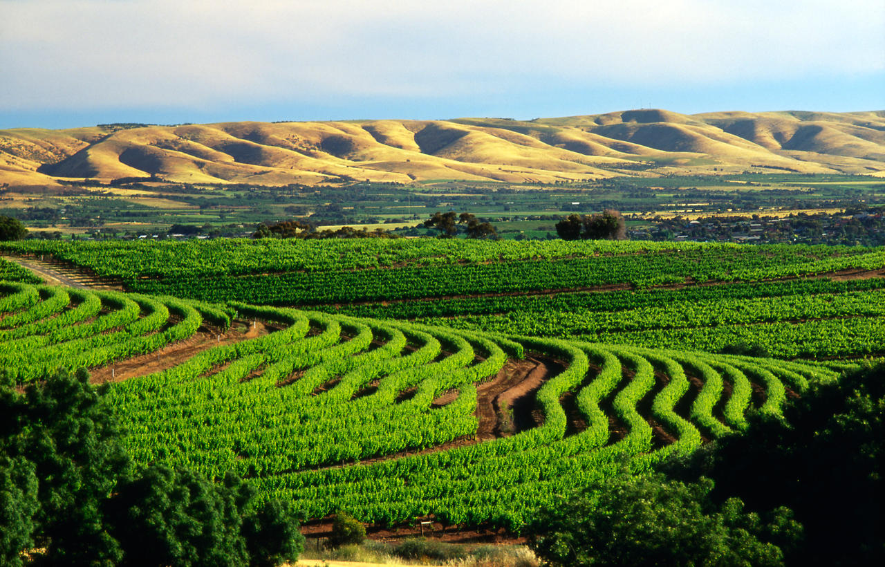 The Top 10 Reasons Why Mclaren Vale Is Australia S Most