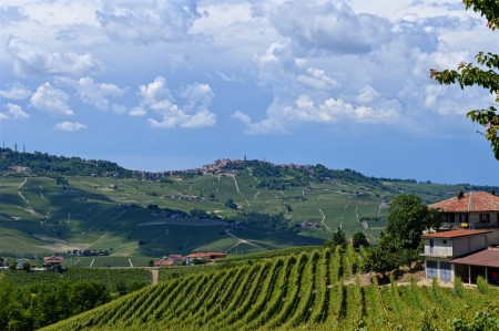 Late Spring Barolo