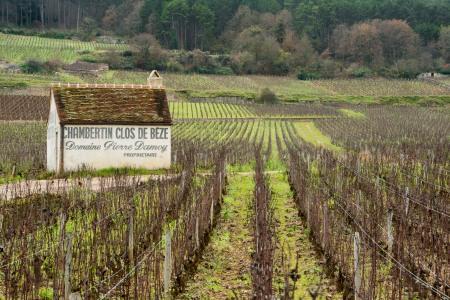 Jason-Davis-Images-Burgundy-Wine-Wankers-0011