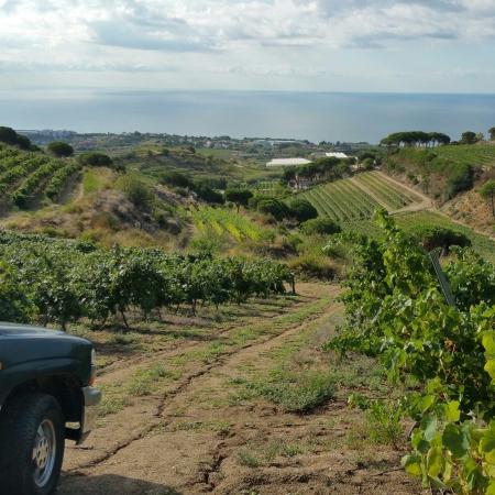 wine wankers barcelona catalonia catalunya alta alella