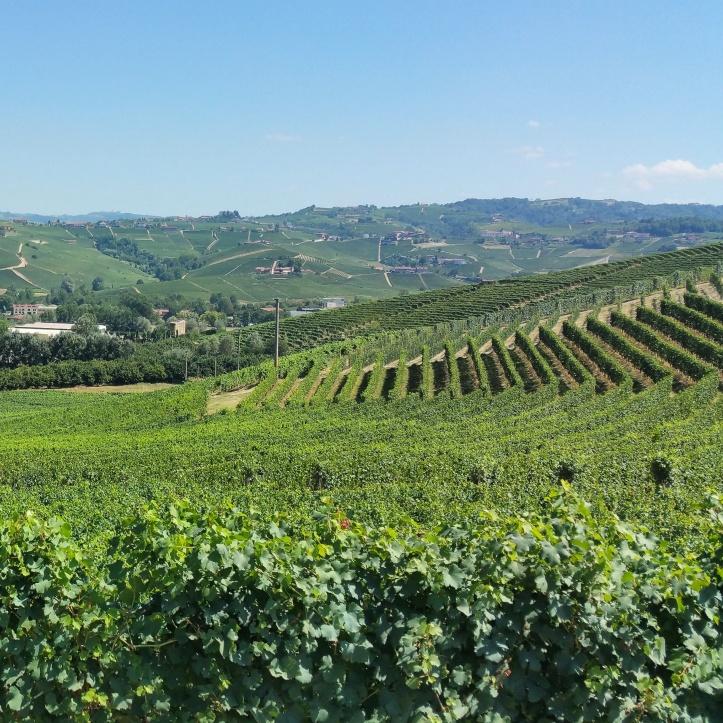 wine wankers piemonte trip piedmont trediberri vineyards la morra