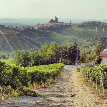 wine wankers piemonte trip rivetto vineyards looking at serralunga