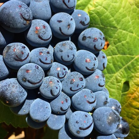 happy-grapes
